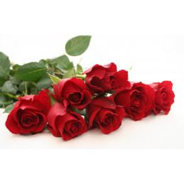 TRANDAFIRI (rose)